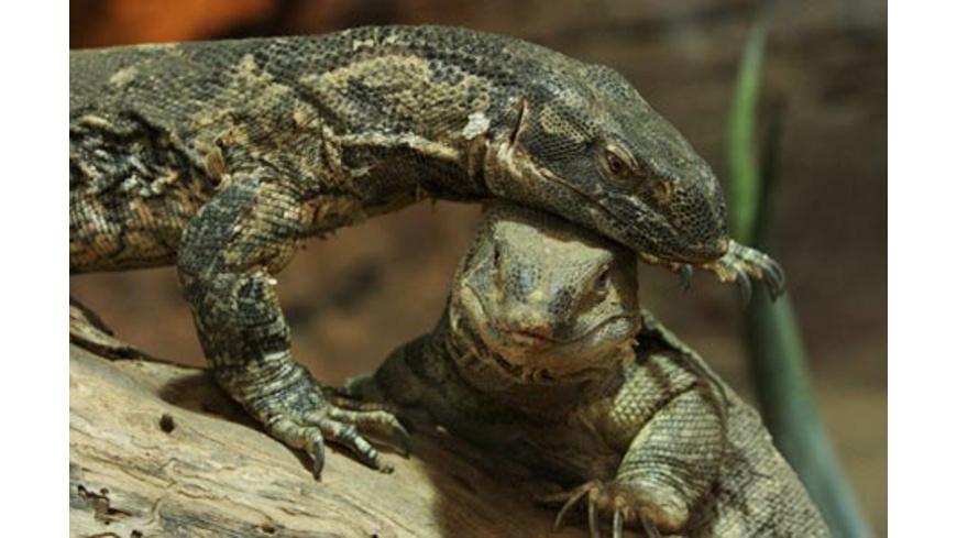 Reptilien-Fuetterung in Landau