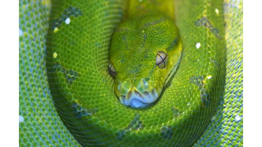 Reptilien-Tierpfleger für einen Tag