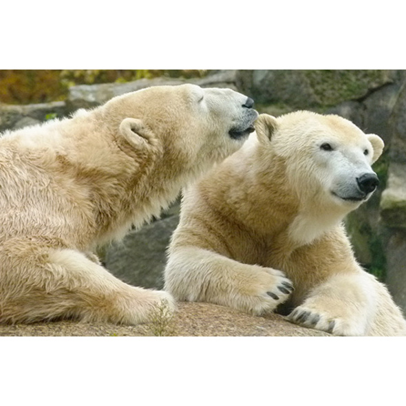 Städtetrip Berlin mit Zoologischem Garten für 2 (2 Tage)